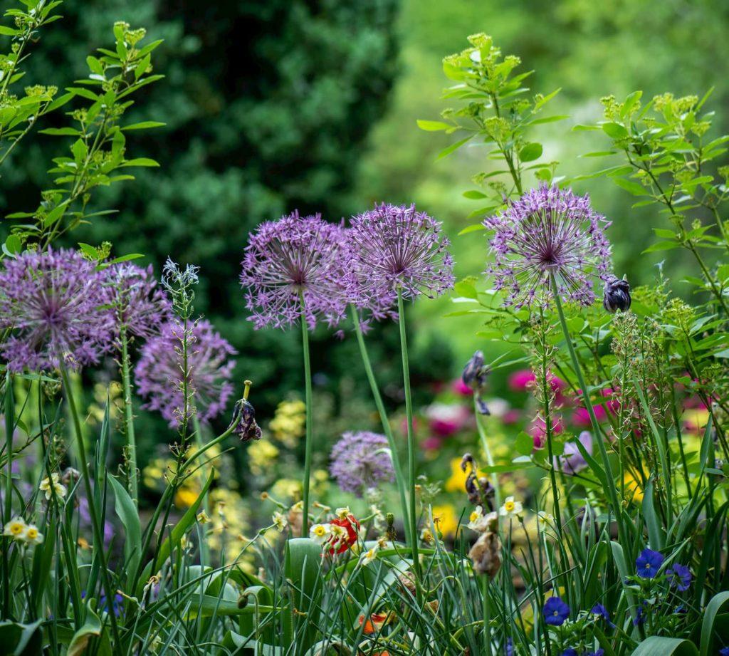 Purple flowers in a garden design